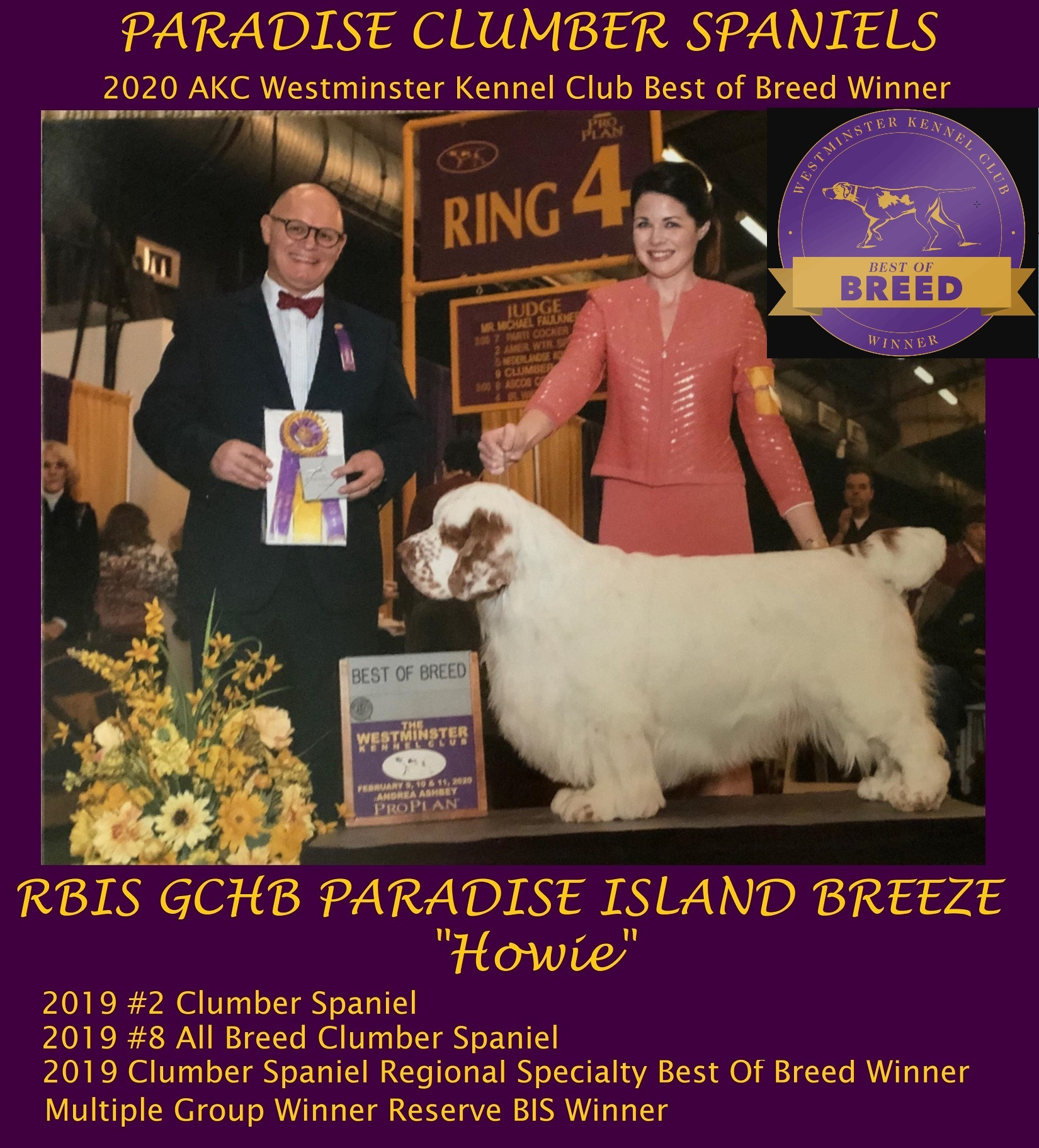 2020 AKC Westminister Best-Of-Breed